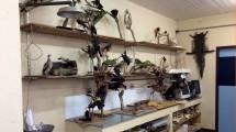 Animais empalhados fazem de um dos laboratórios do curso.