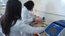 Laboratório de Genética e Biologia Molecular Aplicada.